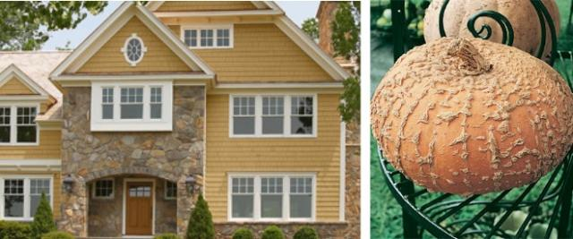 Tan pattern pumpkin inspired exterior color scheme