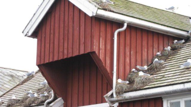 shake roof