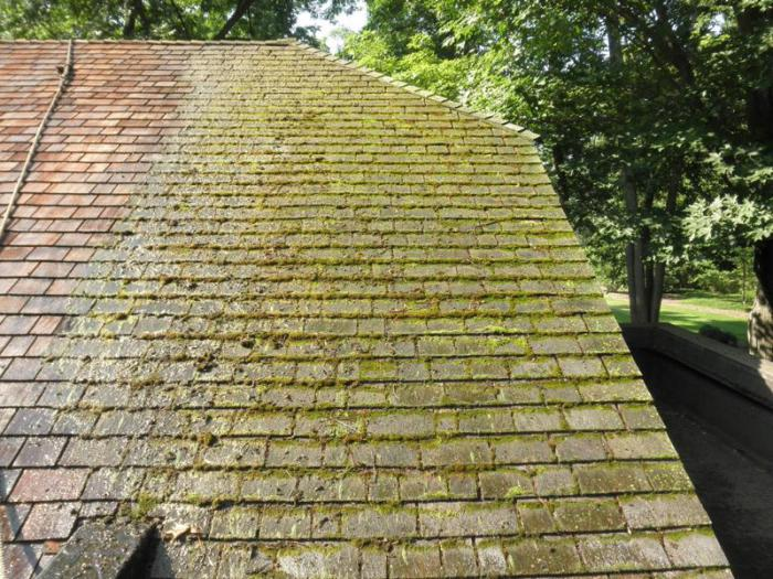 roof tiles with green moss and algae overgrowth