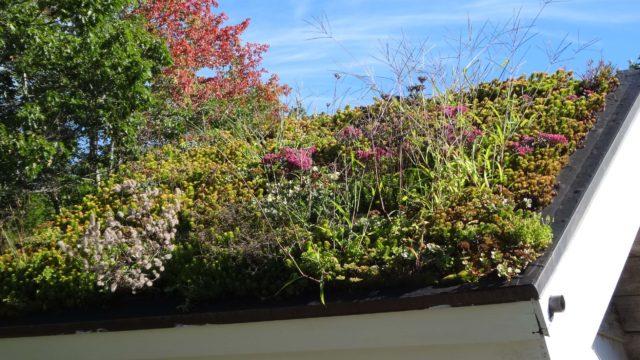 botanical roof garden in maine