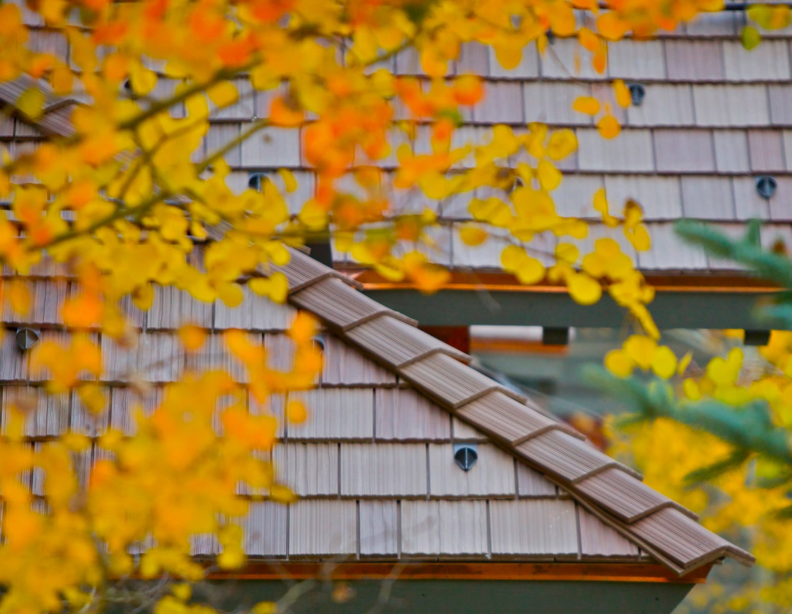 Autumn Shake Roof Davinci Roofscapes
